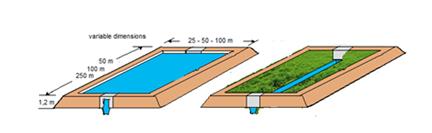 Acquacoltura di acqua dolce e produzioni orticole cibi for Vasche per allevamento ittico