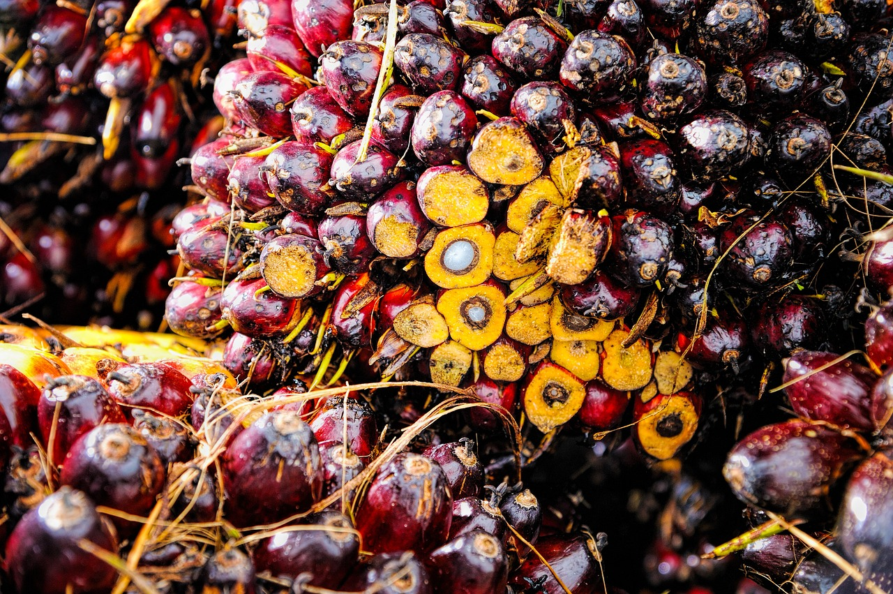 Red Fruit Background Oil Palm Ripe Produce