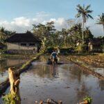 GIAHS - PATRIMONIO AGRICOLO DI IMPORTANZA GLOBALE