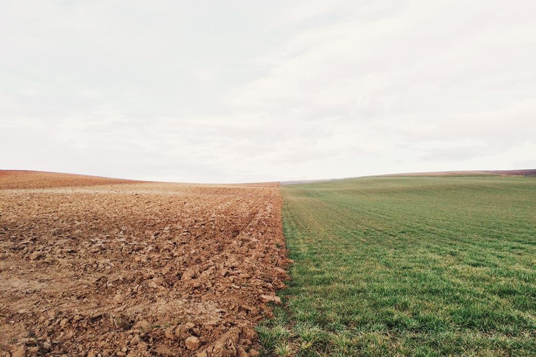 VERSO GLI STATI GENERALI DELL'AGRICOLTURA