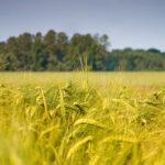 LA CASA DELLA AGRICOLTURA ALLA CENTRALE DELL'ACQUA